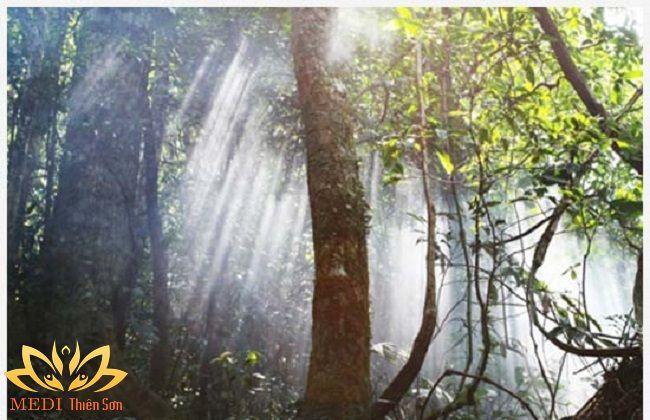 khu du lịch sinh thái ba vì