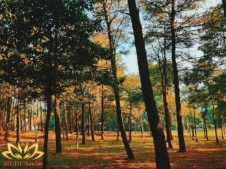 kinh nghiệm cắm trại vườn quốc gia ba vì