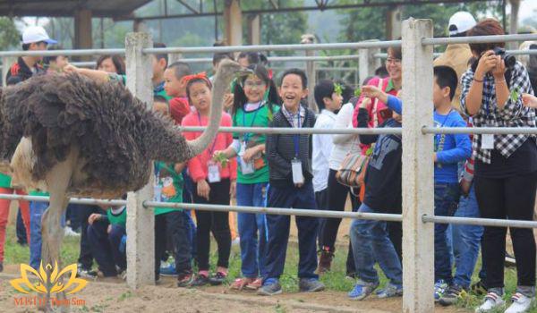 Thăm quan chuồng nuôi đà điểu tại Detrang Farm
