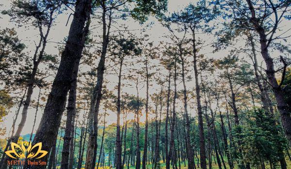 Tour du lịch cho học sinh tiểu học với thiên nhiên trong lành